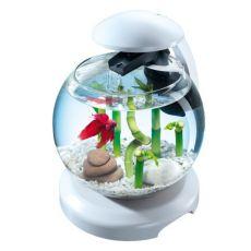 Akvárium pre bojovnicu alebo karasa, biele - guľa 6,8 L