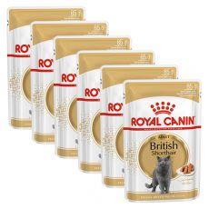 Royal Canin British Shorthair kapsička pre britské krátkosrsté mačky v šťave, 6 x 85 g
