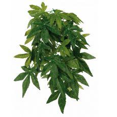 Rastlina do terária Abutilon - závesná 20 x 50 cm