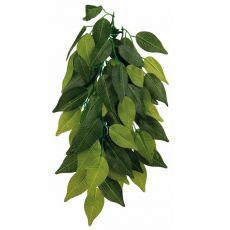Rastlina do terária FIKUS - závesná 20 x 50 cm