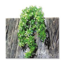 Rastlina do terária TerraPlanta Cannabis - 65cm