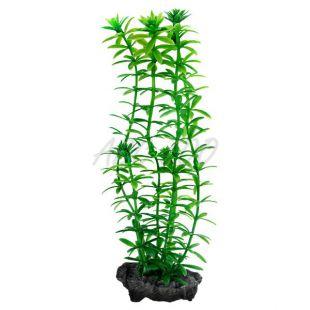 Egeria densa (Anacharis) - rastlina Tetra 15 cm, S
