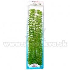 Limnophila sessiliflora ( Ambulia) - rastlina Tetra 38 cm