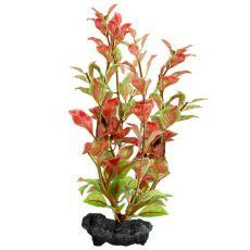 Ludwigia repens ( Red Ludwigia) - rastlina Tetra 23 cm, M