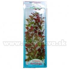 Ludwigia repens ( Red Ludwigia) - rastlina Tetra 38 cm, XL