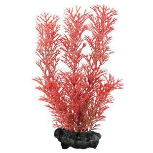 Myriophyllum heterophyllum (Red Foxtail) - rastlina Tetra 15 cm, S