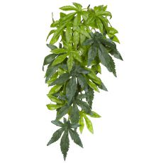 Abutilon Silk Small - rastlina do terária