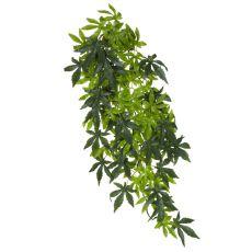 Abutilon Silk Large - rastlina do terária