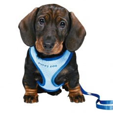Postroj a vodítko pre psíkov - modrý