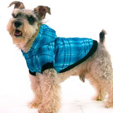 Bunda pre psa - károvaná, modrá, XS