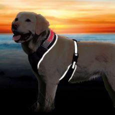 Postroj pre psa so svetelným pásikom S-M, 45-60cm