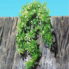 Rastlina do terária TerraPlanta Canabis - 50 cm
