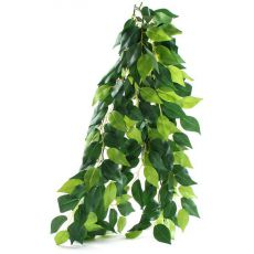 Ficus silk medium - rastlina do terária, 55cm